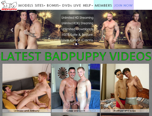 Free Bad Puppy Sign Up